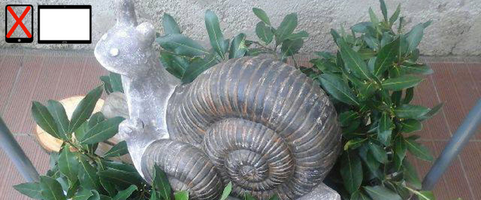 L'Escargote, Partenaire Officiel de Miss Curvy ! (Voir explications ci-dessous)